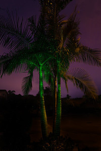 One Green SparkleMagic Illuminator placed below King Palm Tree.